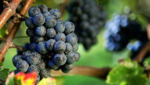 Weingut Klumpp1